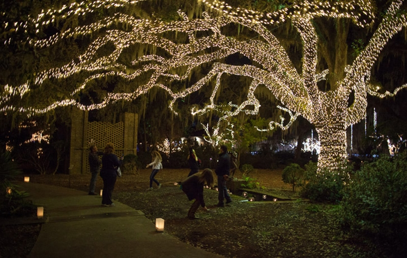"""Every inch of a live oak tree is lit in an area of the Sculpture Garden."