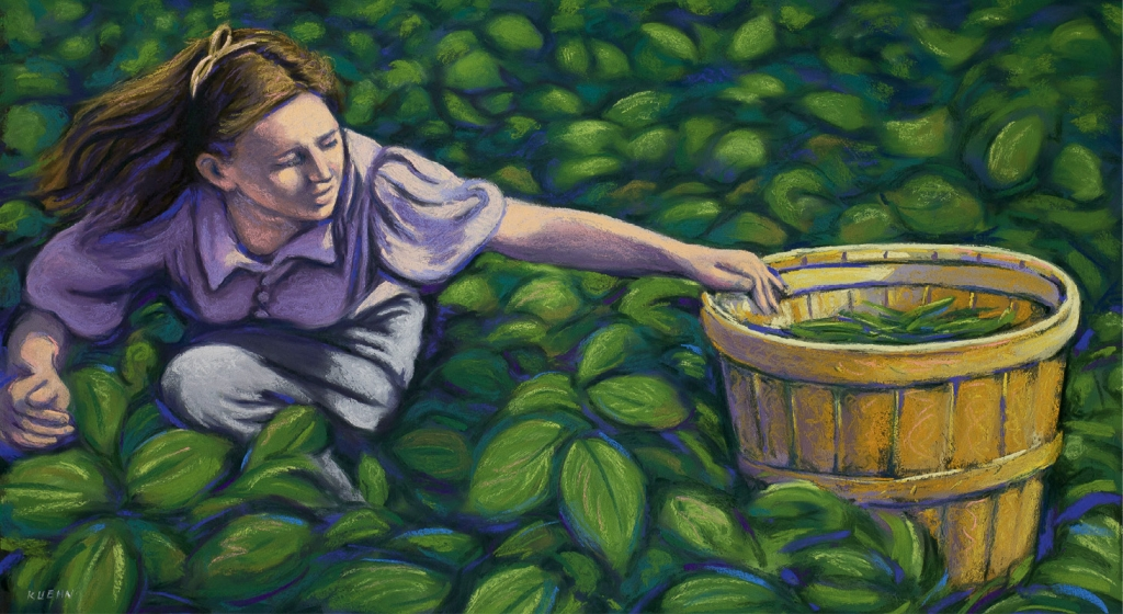 Picking Green Beans, Brian Kuehn