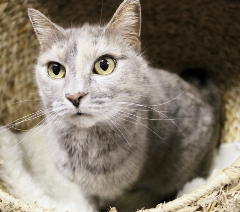 Happy is available for adoption from the North Myrtle Beach Humane Society.