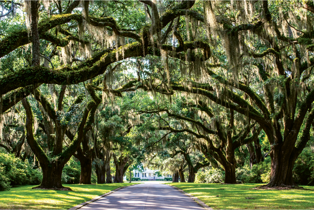 READERS' CHOICE AWARD WINNER  Avenue Of The Oaks  Photographer: Austin Bond  Where: Litchfield Plantation, Pawleys Island