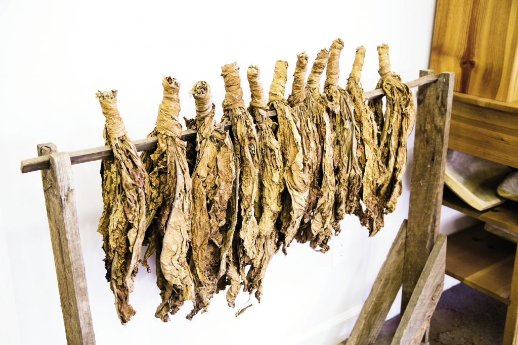 Regional flora and fauna are on display throughout the museum, including the once important local crop, tobacco.