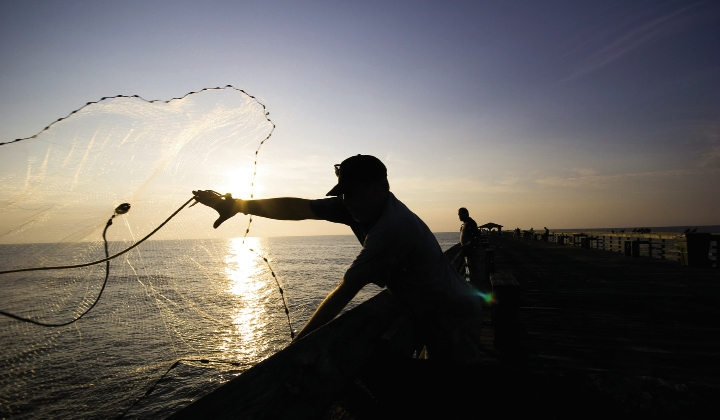 An early morning fisherman throws a cast net with practiced efficiency. Small bait fish often congregate near the pier's pilings, and fisherman up top often stay sunrise to sunset.