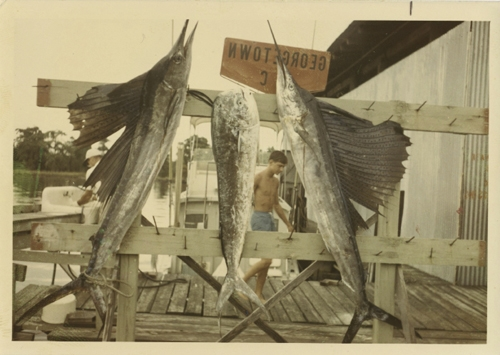 Two sailfish and one bull dolphin caught by the Fitzgeralds in Georgetown.