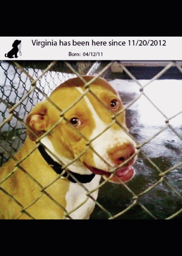 Virginia has been at the Grand Strand Humane Society since 2012.