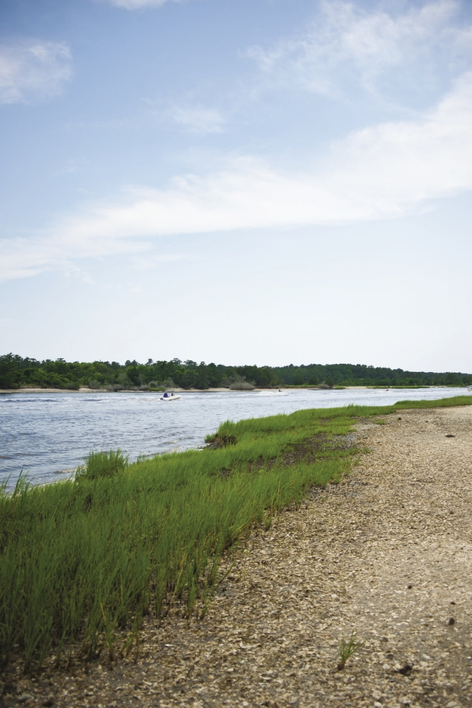 Cord grass and shell bank form a protective barrier for the vulnerable tidal marsh.