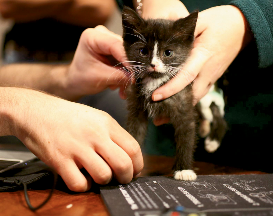 One of the maker projects involved building a wheelchair for this kitten, Tiny Tim.