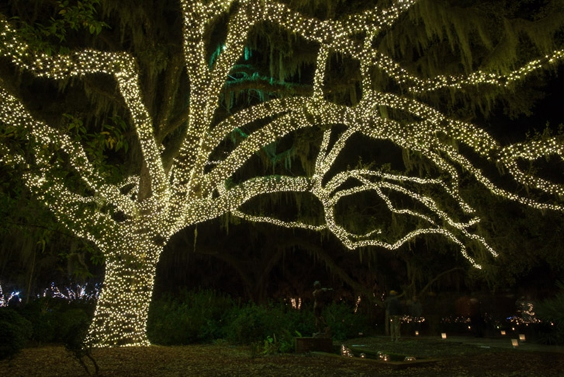"""""""Every inch of a live oak tree is lit in an area of the Sculpture Garden."""