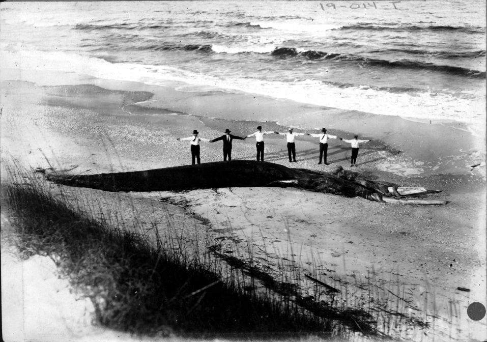 When a whale washed up on the island in 1919, several groups made trips to the island to view the remains.