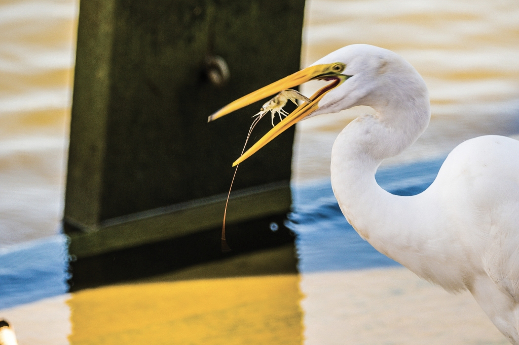 Gotcha - James O'Neil - Huntington Beach State Park, Murrells Inlet