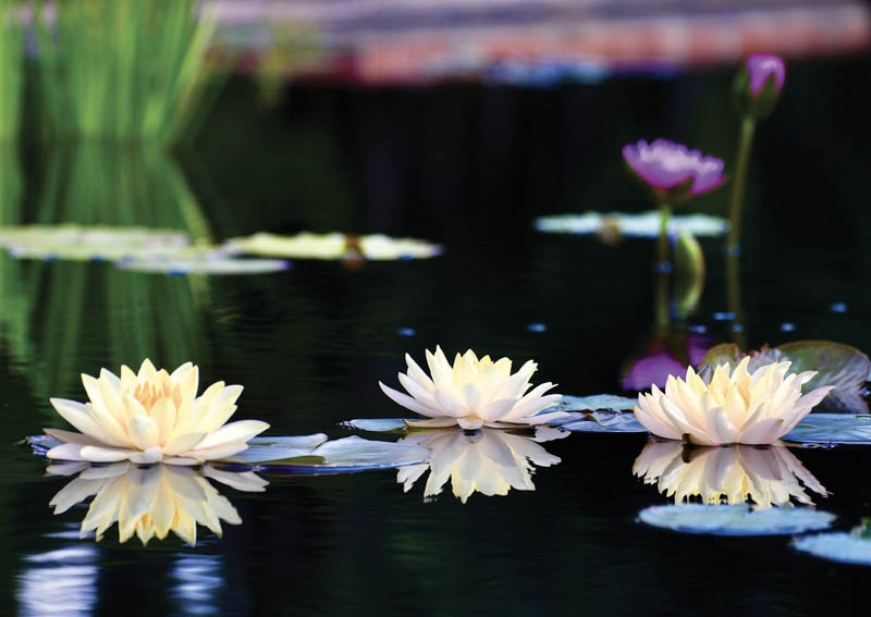 BLOOM, BLOOM, BLOOM - Dana Crumley Lidard, Brookgreen Gardens, Murrells Inlet