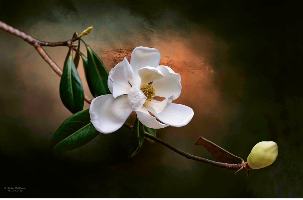 Magnolia on fire  Photographer: Robert DeMarco