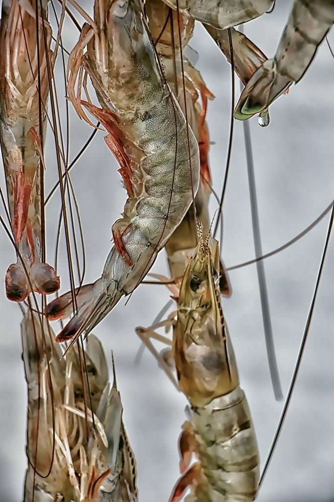 Shrimp - Jacqueline Ginther - Murrells Inlet