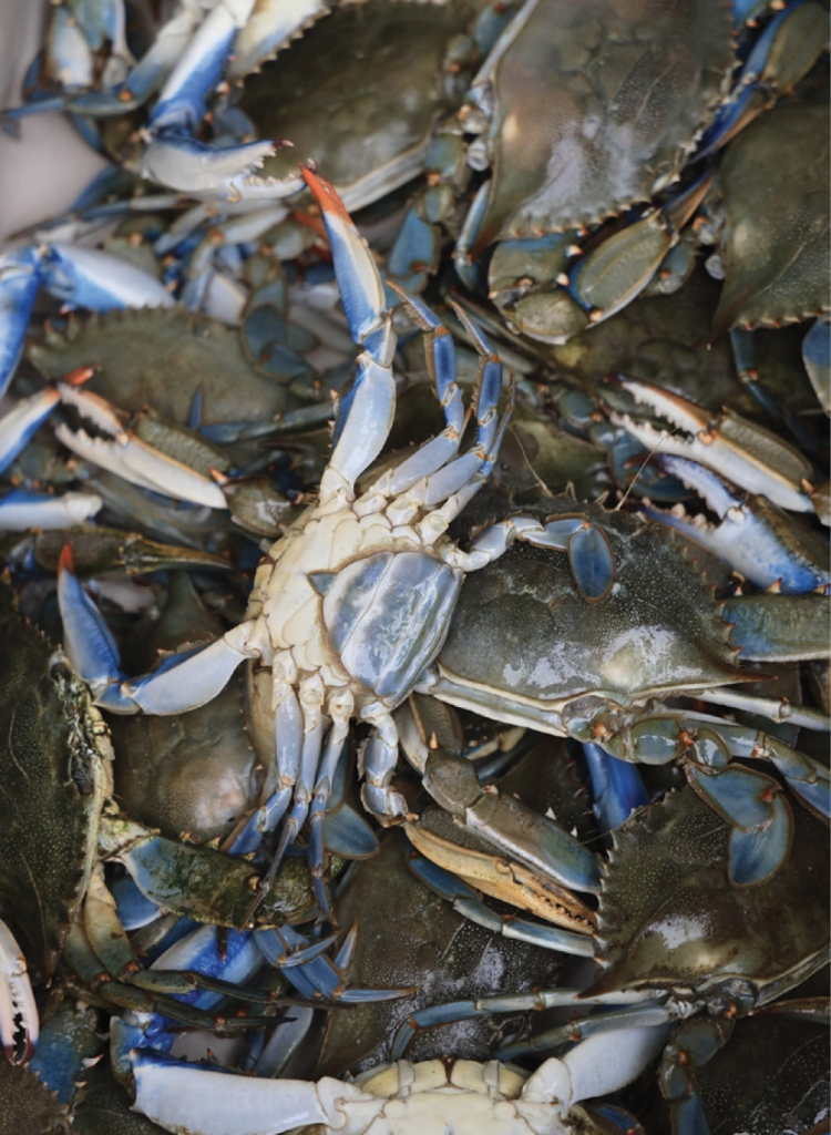 Blue Crabs - Jacqueline Ginther - Crazy Sister Marina, Murrells Inlet