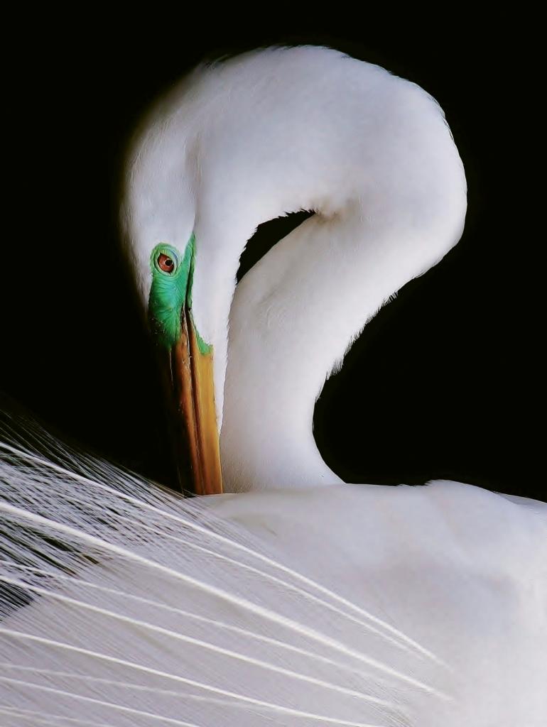 Bleeding Plummage - Photographer: Paulette Thomas Where: Wacaee Zoo