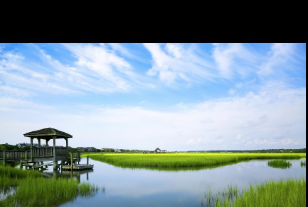 Marsh Lynne Brock Pawleys Island