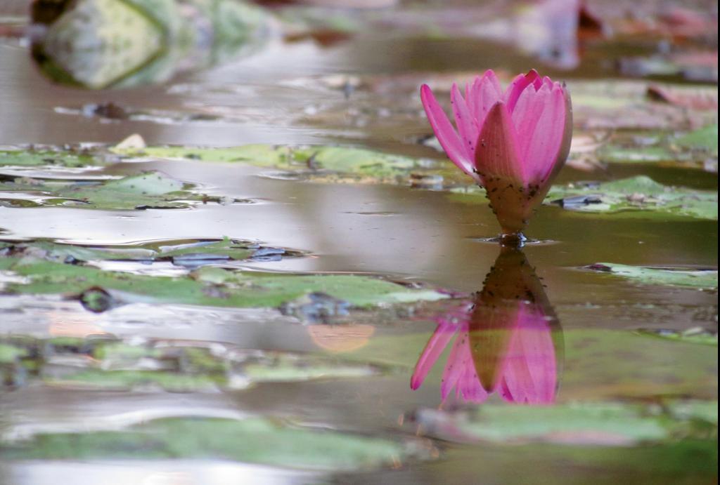 Time to Reflect  Photographer: Holly Linton  Where: Brookgreen Gardens