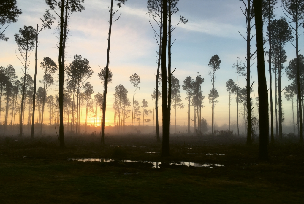 Rise and shine  Photographer: Sydney Sparks  Where: Old Bryan Drive, Myrtle Beach