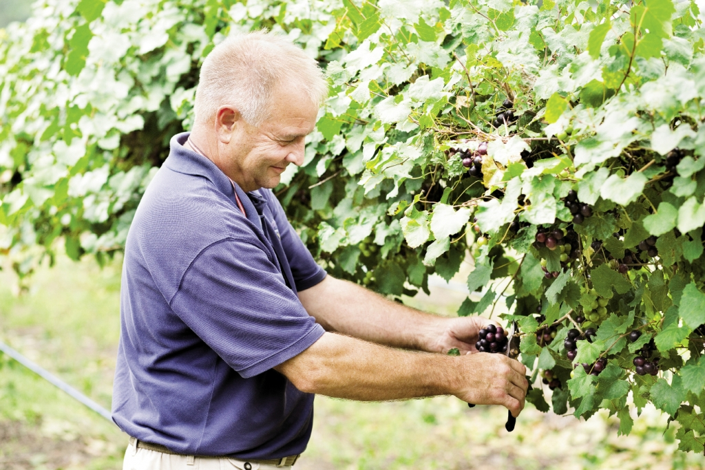 Tending to his Crops:<br />Conway Farmer and entrepreneur Greg Hyman tends his muscadine vines, while the farm cats, tractors and the grapes themselves bask in the sun under Carolina blue skies.