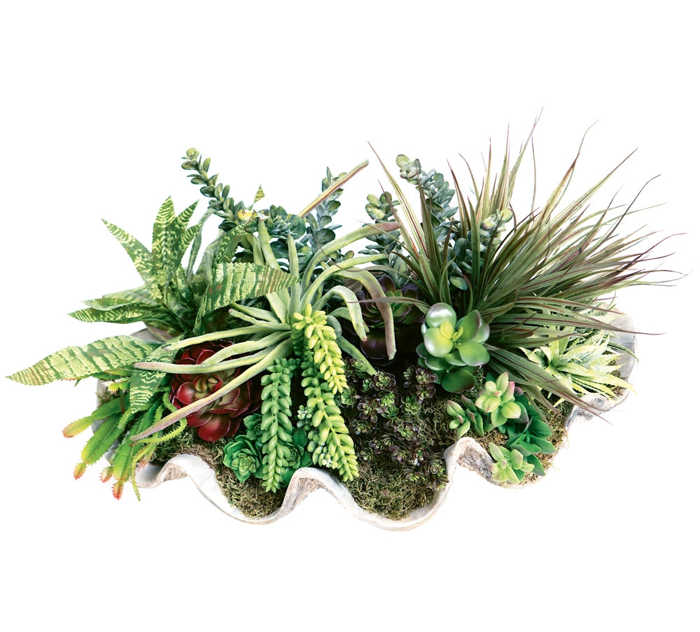 Let this uniquely arranged clam shell of succulents accent any of your interior tables with authentic taste.