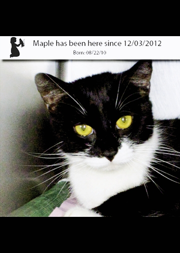 Maple has  been at the Grand Strand Humane Society since 2012.