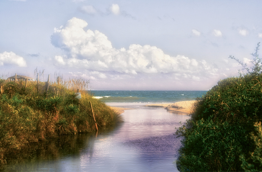Myrtle Beach State Park - Kathaleen Baccari - Myrtle Beach State Park