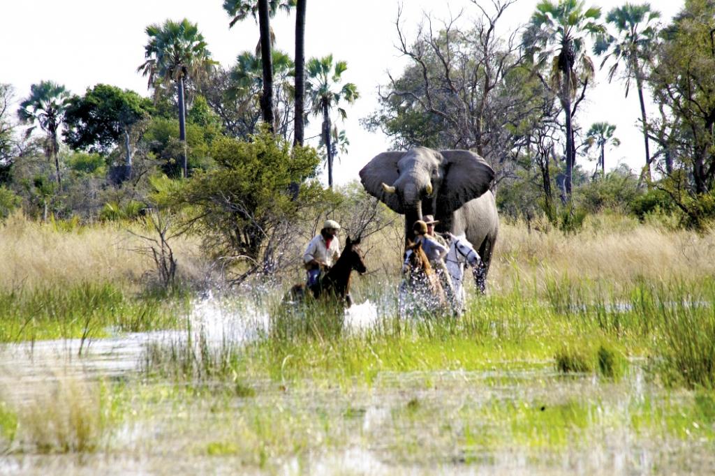 Okavango-Delta-223_opt.jpeg