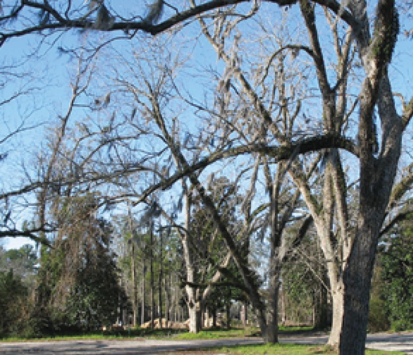 """Neighborhood Temptation: """"The local kids used to try to sneak in to the yard and steal the pecans from the grove,"""" recalls longtime Socastee resident Bo Turbeville."""