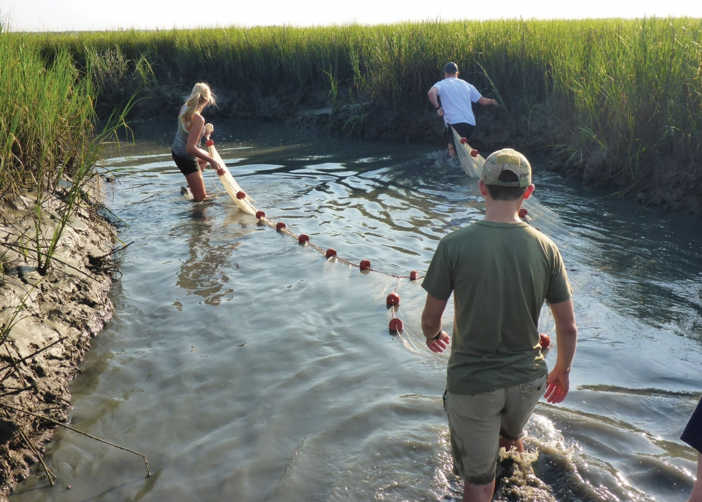 Wading into Studies: The estuaries and salt marshes at Hobcaw Barony provide USC students and faculty an environment that is a living laboratory.