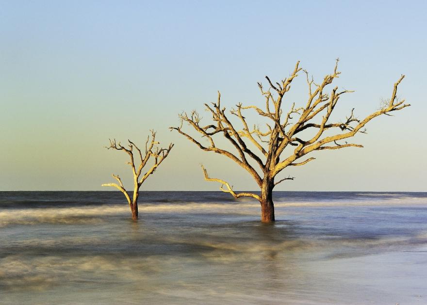 ZOOM<br />Photographer: Paulette Thomas<br />Where: Murrells Inlet MarshWalk