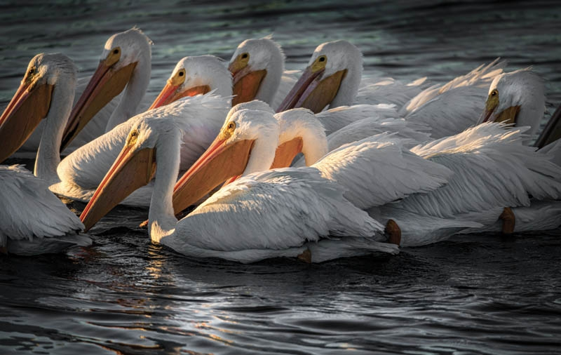 IN THE SPOTLIGHT - Judy Karendal, Huntington Beach State Park, Murrells Inlet