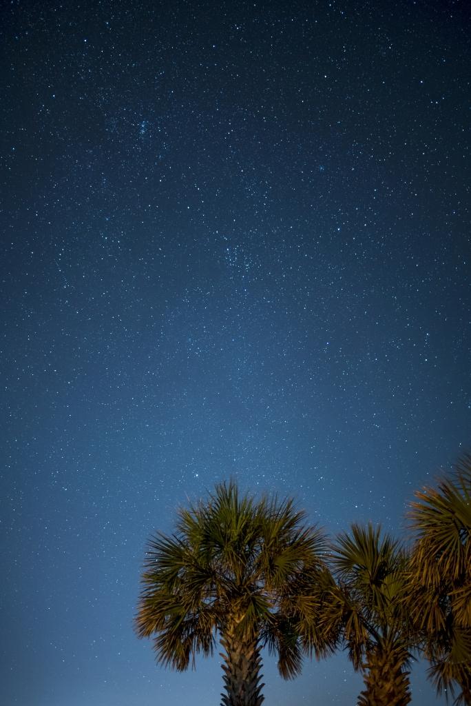 Stars and Palms, Photographer: Leslie Nolan, Where: Sunset Beach, North Carolina