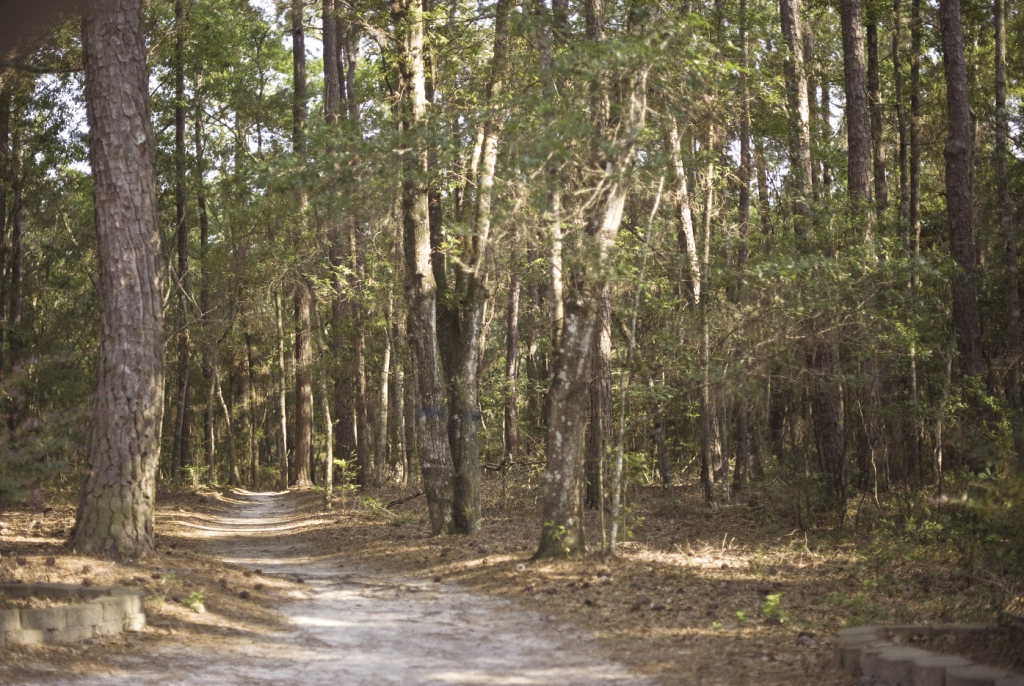 The natural features of the forest remain largely untouched by the walking trails.