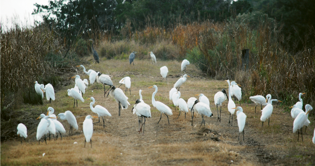 A few of the many species of birds at the center flock together